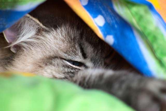 Katze beim Chillen
