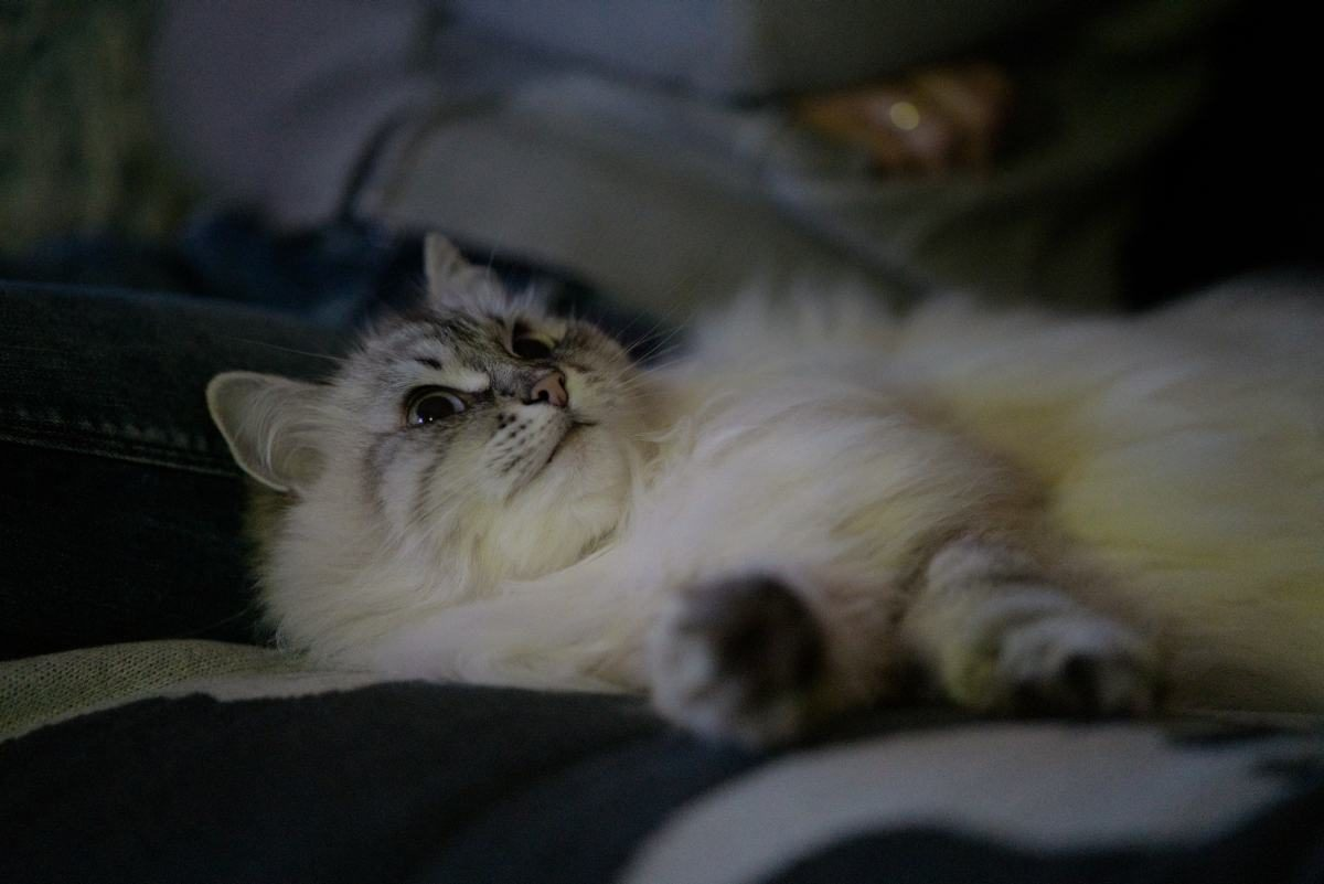 Katze im Dunkeln, Sony A7III